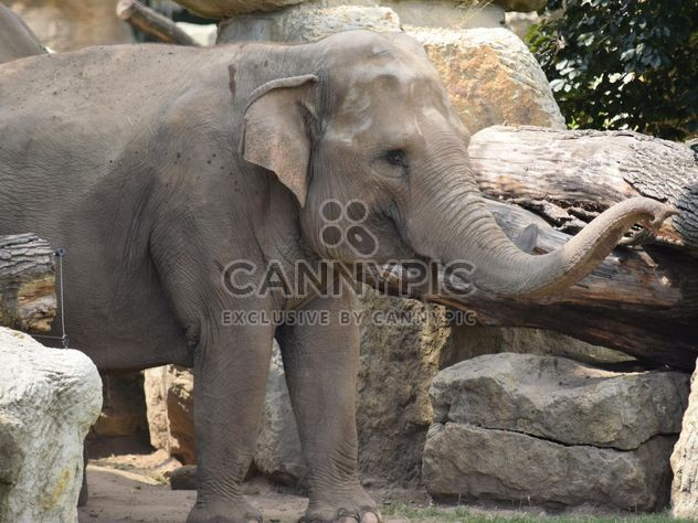 Elephant in the Zoo - Free image #274937