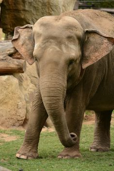 Elephant in the Zoo - image gratuit(e) #274987