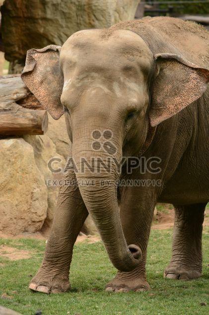 Слон в зоопарке - бесплатный image #274987