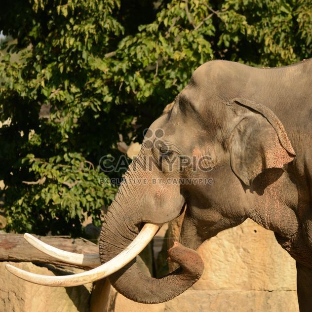 Elephant in the Zoo - Free image #274997