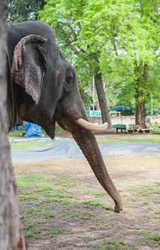 Elephant in the Zoo - image gratuit(e) #275017