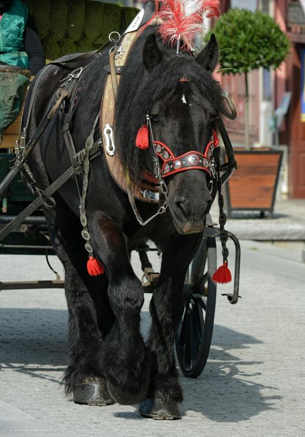 Black Horse dran in carriage - image #275067 gratis