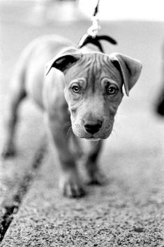Puppy - image gratuit #275407