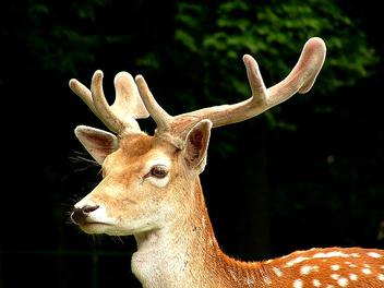 Oh deer.... - Free image #275457