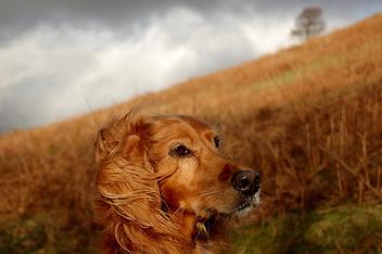 Dog Modelling - image gratuit #275637