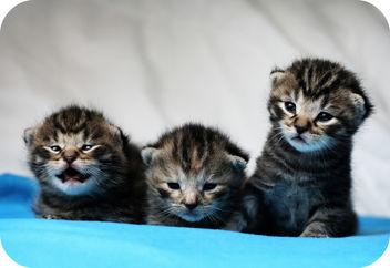 kittens - Kostenloses image #275787