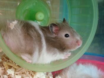 Hamster Fun - image #275807 gratis