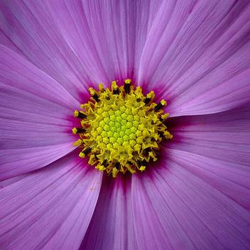 cosmic flower - Free image #275917