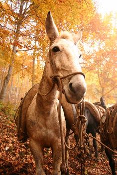 Donkey - Free image #276447