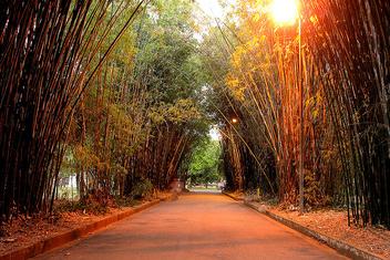 Bamboos - image gratuit(e) #276567