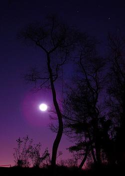 Violet Dreams - Free image #276697