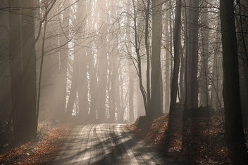 misty morning - image gratuit #276707