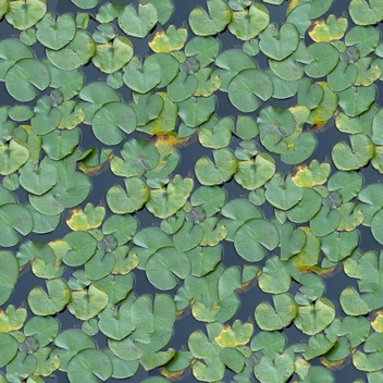 lily pad tiles - Free image #276927