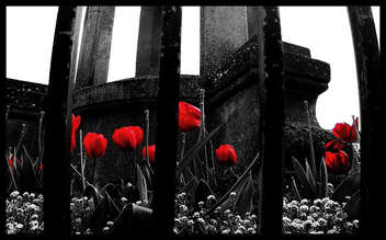 Black & White and Red all Over - image gratuit #277057