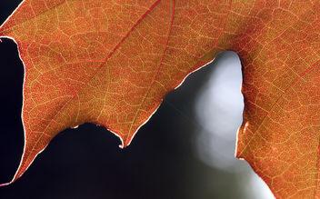 Leaf - Kostenloses image #277187