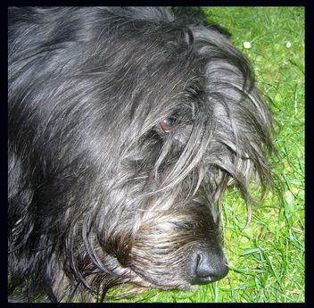 DOG - Free image #277427