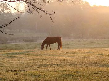 HORSE, SUNRISE, & FOG - image gratuit #277627