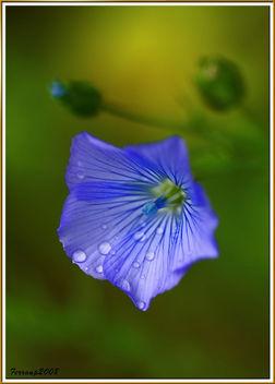 azul 01 - blau - blue - Free image #278427