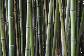Bamboo - Kostenloses image #278807