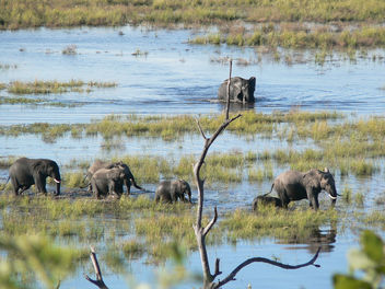 Elephant Walk! - Free image #279067
