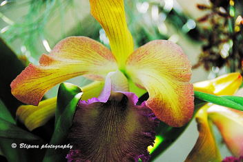 Orchids - Free image #279287