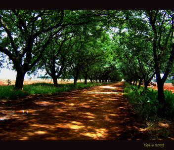 Shadows and Trees - image gratuit #279507