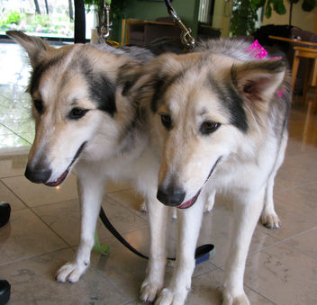 Cute Clones - Free image #279527