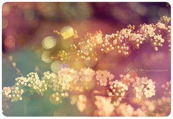 memories - Kostenloses image #279827