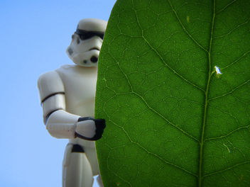 Leaf No Man Behind - image gratuit(e) #279847
