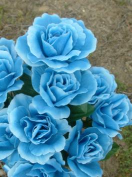Blue Roses - Free image #279897