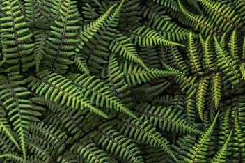 ferns - Kostenloses image #279927