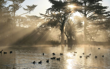 Nature Crepuscular Rays in Golden Gate Park - image #279977 gratis