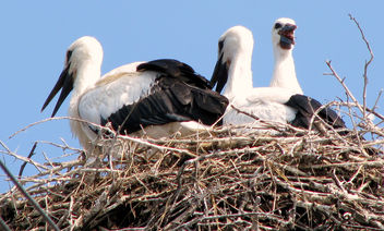 Well stocked nest - Kostenloses image #280287