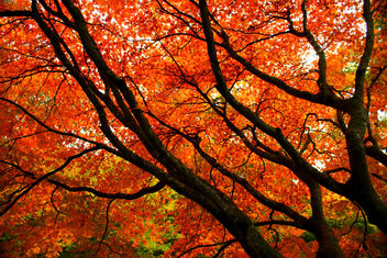 Orange Autumn Branches - Free image #280537