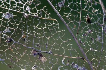 Leaf bones - Free image #280607