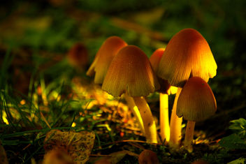 Enchanted Mushrooms - Free image #280707