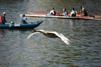 Swan flying over the lake - бесплатный image #281007