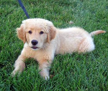 puppy - image gratuit #281107