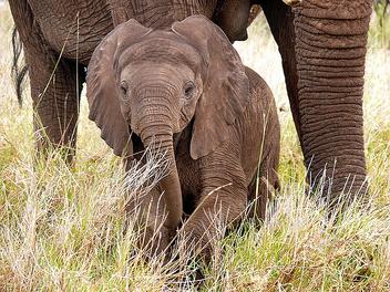 Baby Elephant ! - Free image #281127