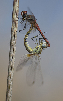dragonfly - Free image #281177