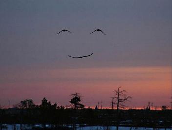 High Smile - бесплатный image #281197