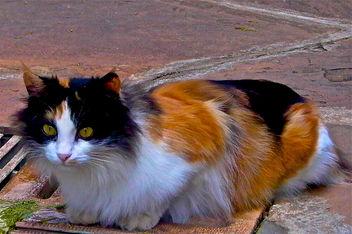 Cat - Free image #281397