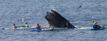 My Whale Captures - Kostenloses image #281537