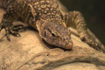 Cute reptile - Free image #282247