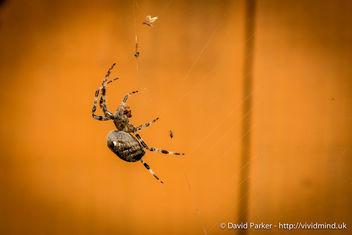 Spider - Kostenloses image #283327