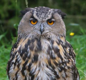 owl-2665 - Free image #283587