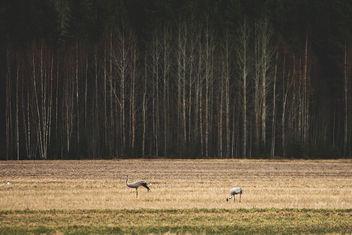 Grey Heron - Free image #283667