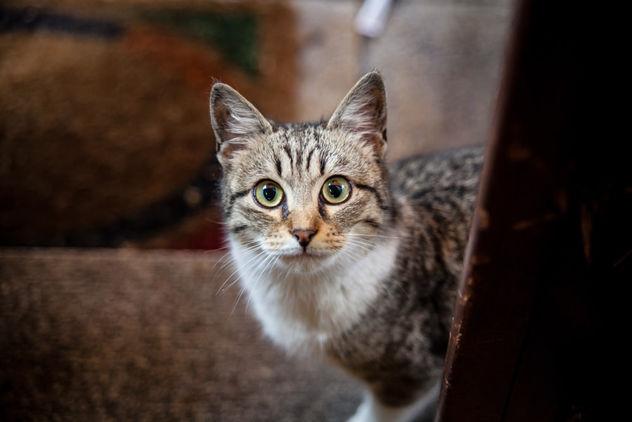 Mirada felina - Free image #283727