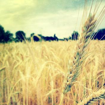 fields - Free image #284287