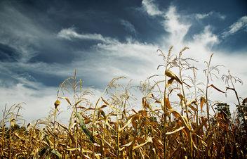 Autumn - image #284517 gratis